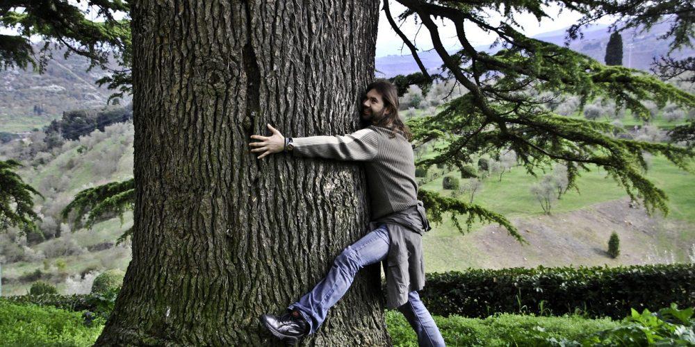 Objímání stromů